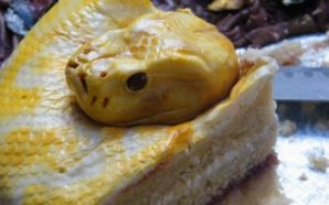 The scariest cake that you will see all day [albino…